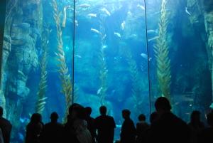 happyhomeblog.com_Aquarium-of-the-Pacific